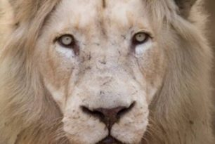 13 Laws of LionHearted Leadership – Our next Adventure